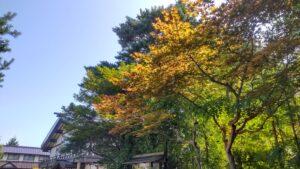 色づく境内の樹木